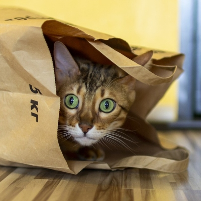 https://www.promotionmagazine.it/wp/wp-content/uploads/2019/07/PACKAGING-GATTO.jpg