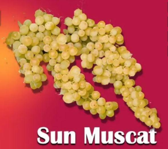 https://www.promotionmagazine.it/wp/wp-content/uploads/2020/10/sun-muscat.jpg
